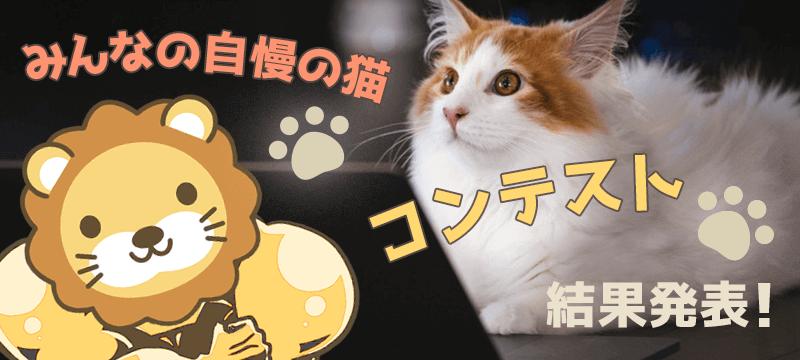 みんなの自慢の猫コンテスト